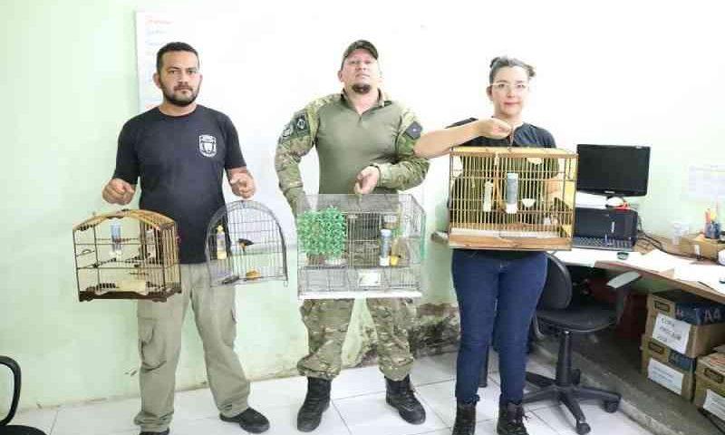 Agentes da Semma resgatam quatro pássaros silvestres em comércio no bairro Aldeia, em Santarém, PA