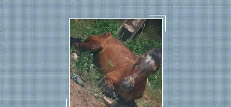 CCZ recebe abaixo-assinado contra maus-tratos a cavalos em Santarém, PA