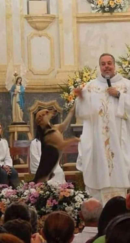 Resultado de imagem para Padre resgata cães de rua e os leva para a missa para serem adotados