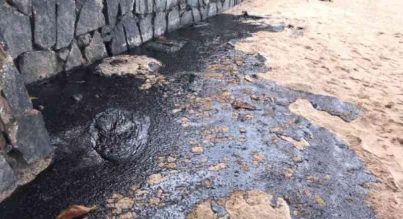 Derramamento de óleo causa morte de animais e polui o litoral de Pernambuco