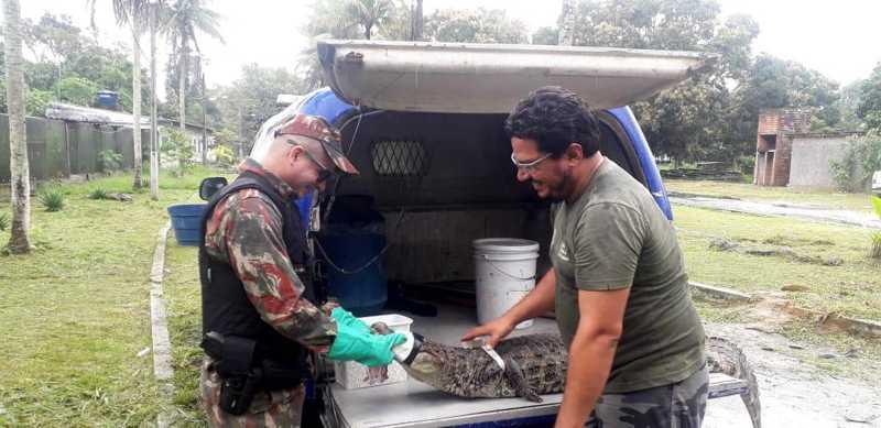 Animal encontrado na Madalena está sob cuidados do Cetas Tangará. Foto: CPRH/Divulgação