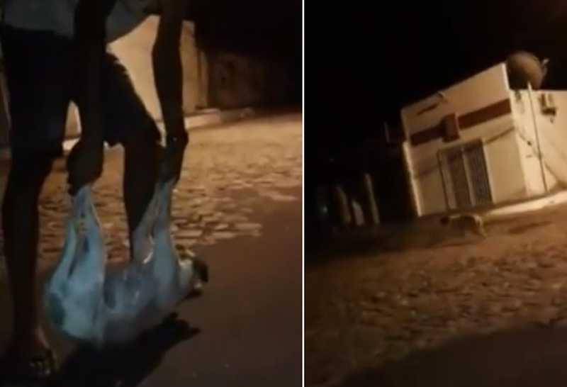 Cachorro foi arremessado por adolescente em Jerumenha. — Foto: Reprodução