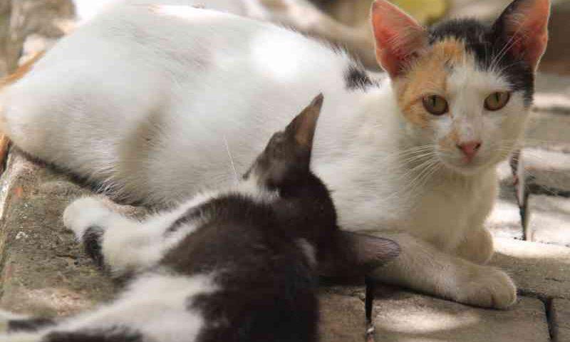 Por abandono, número de animais nas ruas cresce em Teresina, PI