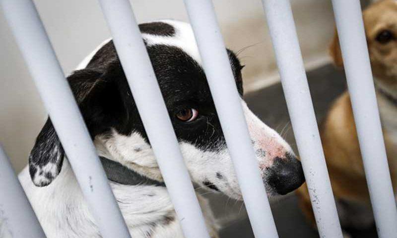 A GNR identificou o dono do canil onde animais estavam e participou o caso ao tribunal. Foto: LUSA