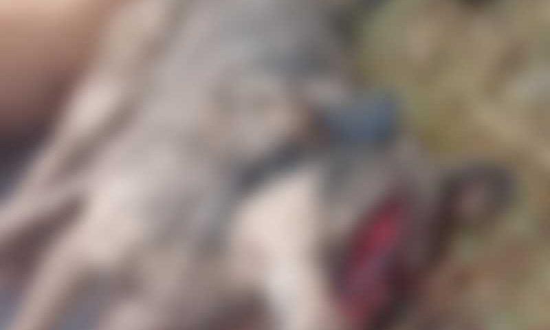 Suspeita é que cães foram mortos com golpes de facão. Foto: Blog Maringá Na Hora