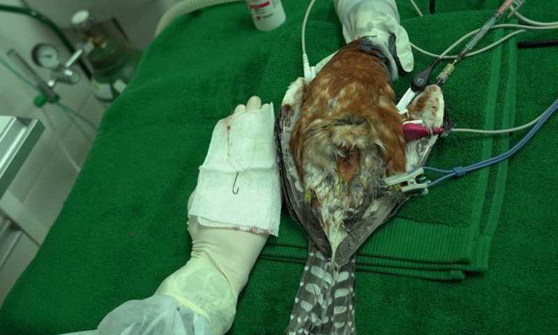 Pássaro é encontrado com anzol no estômago no Parque do Iguaçu