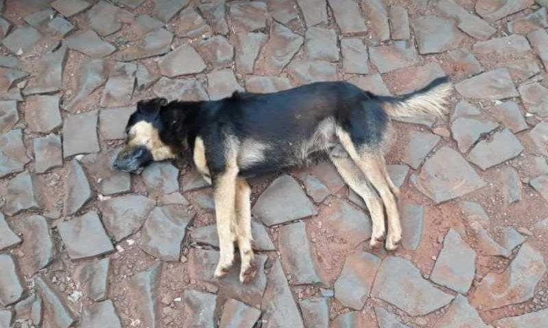 Homem é preso e tem arma apreendida após morte de cachorro em Realeza, PR