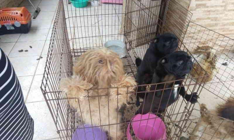 Cachorros vítimas de maus-tratos são resgatados em Rio das Ostras, no RJ