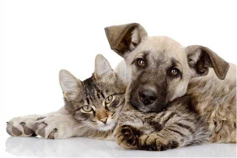 Serão 10 a 15 castrações de cães e gatos diárias. Foto: Divulgação