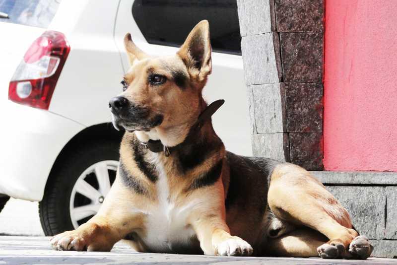 Iniciado censo de cães e gatos em Teresópolis, RJ