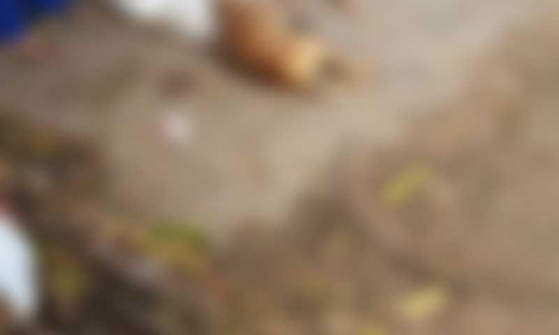 Homem mata cachorro do vizinho a facada e é detido pela polícia em Boa Vista, RR