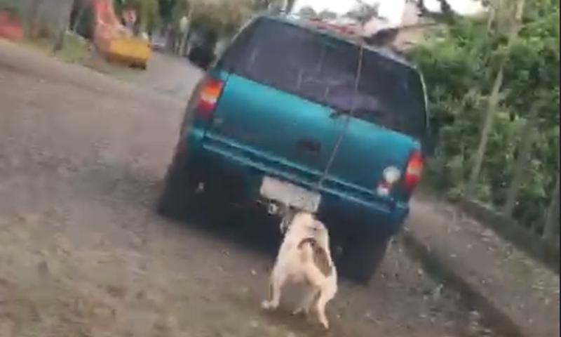 Cachorro é arrastado por ruas de Ijuí (RS) na tarde deste domingo; VÍDEO