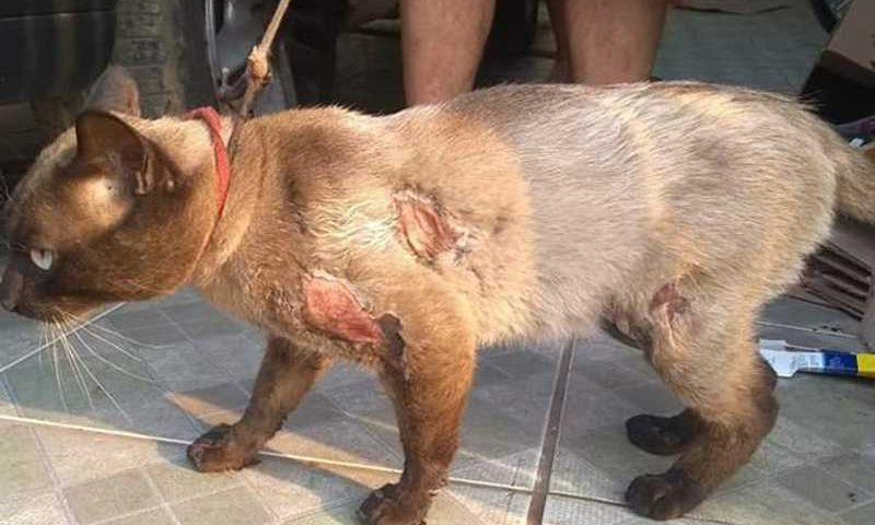 O animal sofreu vários ferimentos/ Foto: Polícia Civil O animal sofreu vários ferimentos/ Foto: Polícia Civil