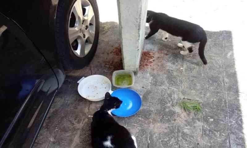 Elan diz que síndico não pode impedir moradores de alimentar animais