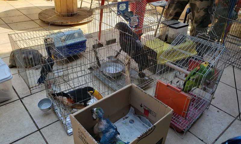 Aves raras apreendidas pela Polícia Federal, nesta quinta-feira (12), em uma casa em Jacarepaguá, na Zona Oeste do Rio — Foto: Reprodução
