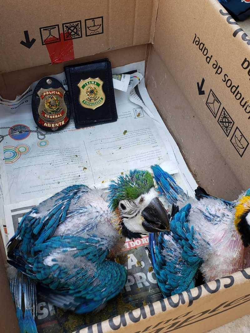 Ave apreendida pela Polícia Federal, em uma casa em Jacarepaguá, na Zona Oeste do Rio — Foto: Reprodução