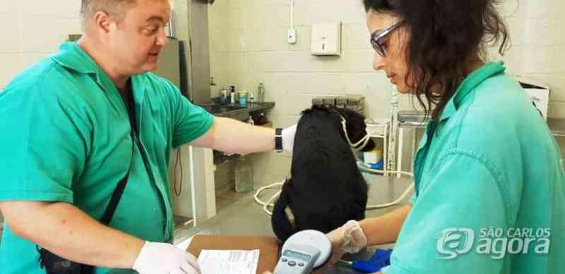 Mais de mil animais já foram castrados pela equipe do Canil Municipal de São Carlos, SP