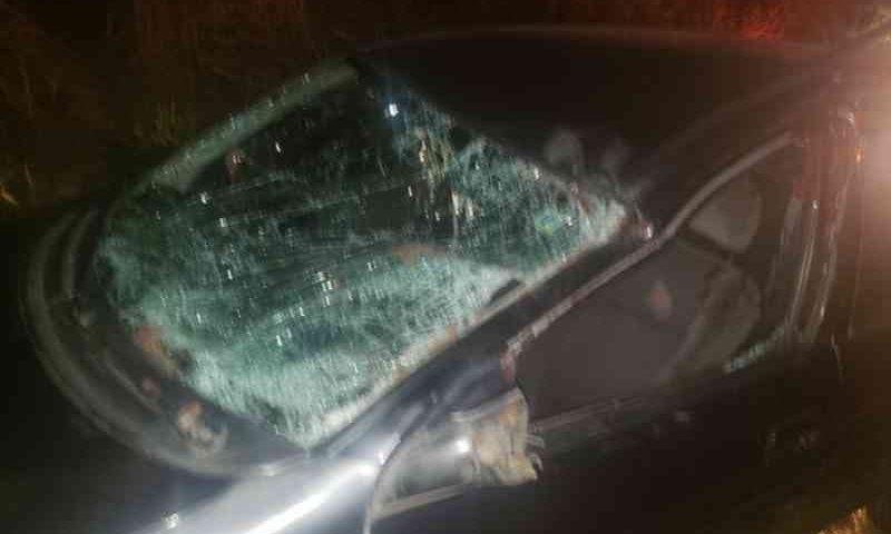 Cavalo morre após ser atropelado por dois veículos em vicinal que liga Garça a Ubirajara, em SP