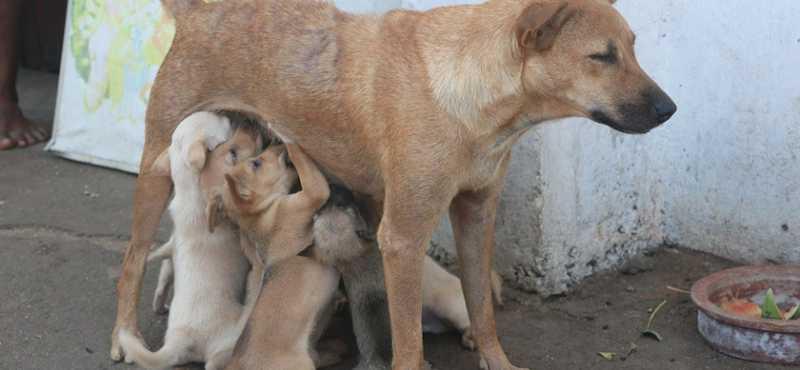 SP: Atibaia e Bragança Paulista promovem ações de castração de animais