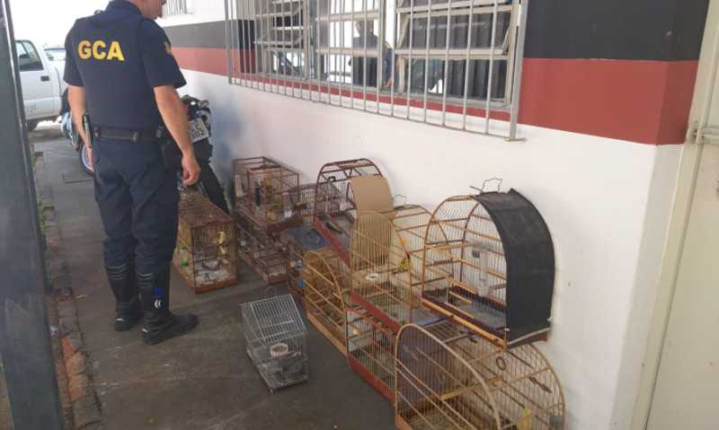 Guarda Ambiental apreende 83 aves silvestres e multa homem em R$ 46 mil em Bragança Paulista, SP