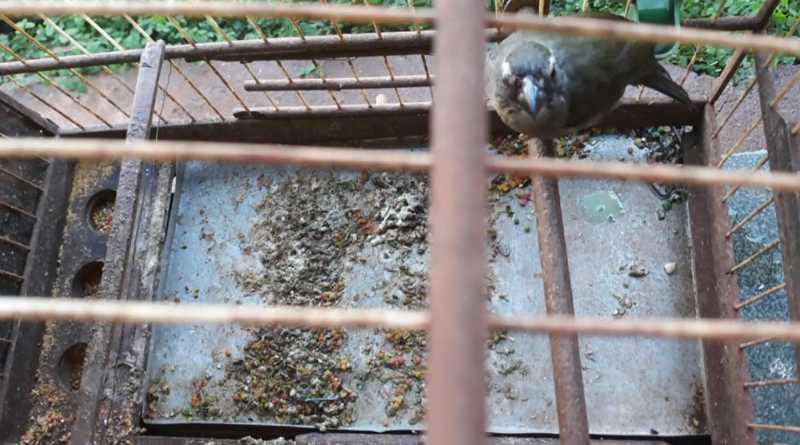 Criador de aves é multado em R$ 80 mil por suspeita de maus tratos em Colômbia (SP) — Foto: EPTV/Reprodução