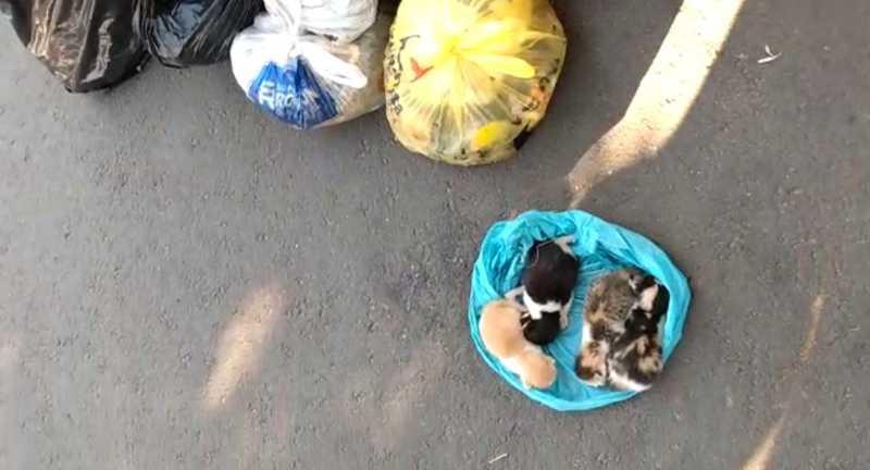 Gatos foram resgatados após serem encontrados dentro de sacola plástica em Guararapes — Foto: Arquivo Pessoal/Fabiana Vicentini