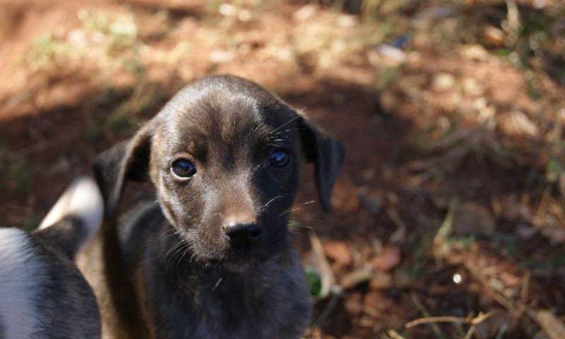 Limeira passa a contar com Código Municipal dos Direitos dos Animais — Foto: Alessandra Santiago