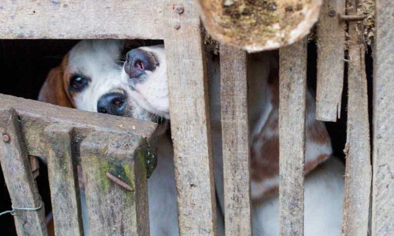 Animais estavam presos dentro de gaiolas na zona rural de Natividade. — Foto: Divulgação/Polícia Ambiental