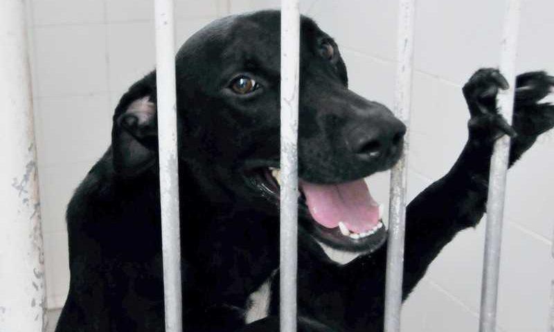 Câmara de Praia Grande aprova projeto de incentivo à adoção de animais de estimação — Foto: Divulgação/Prefeitura de Praia Grande