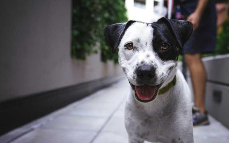 Projeto prevê que cães e gatos de até 10 kg possam ser transportes em coletivos municipais — Foto: Divulgação