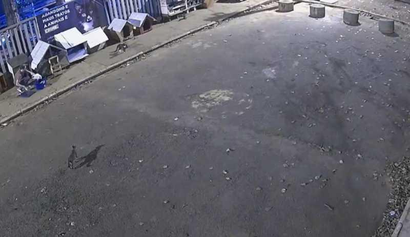 Câmeras de segurança da Represa flagram abandono de gatos em Rio Preto, SP; vídeo