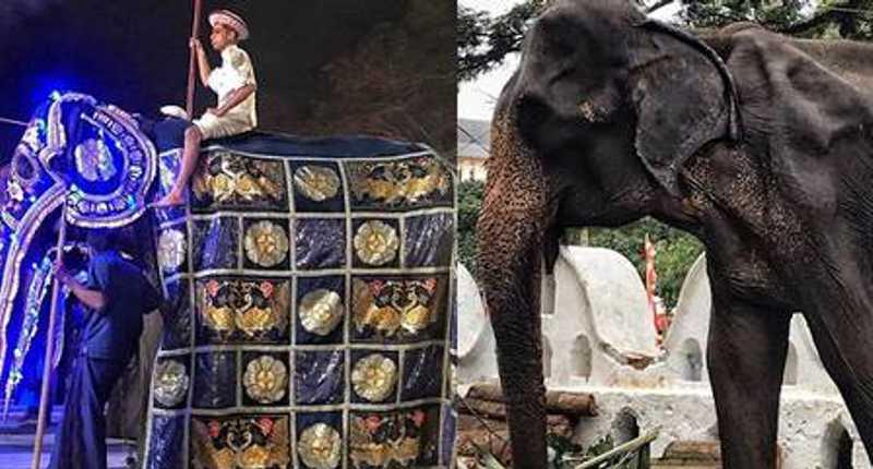 ElefanteTikiri, de 70 anos, tem saúde fragilizada e magreza extrema Foto: Reprodução/ Save Elephant - Lek Chailert