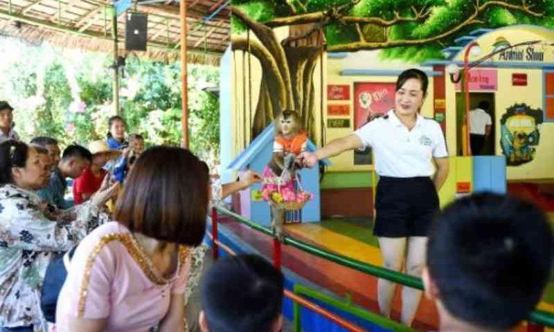 Ilha de macacos no Vietnã atrai turistas e críticas
