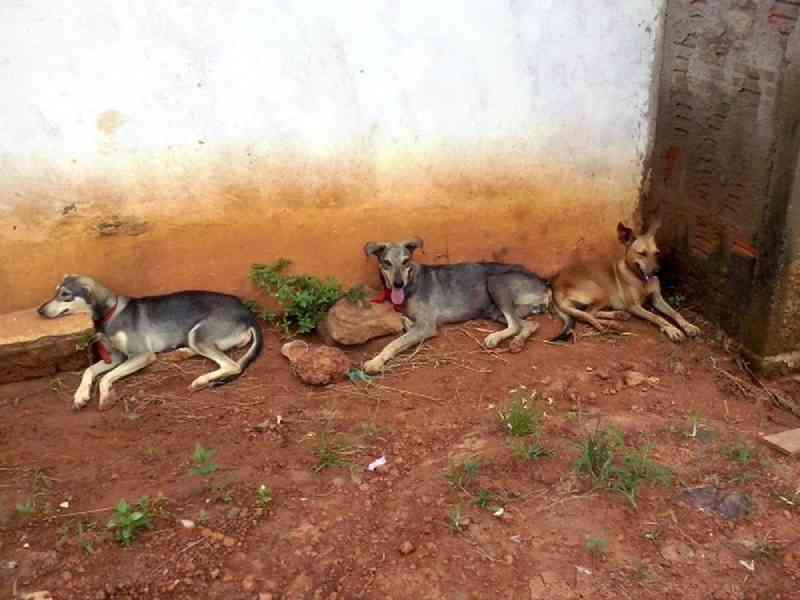 Projeto que prevê castração de animais de rua no interior do AC segue parado após mais de 1 ano