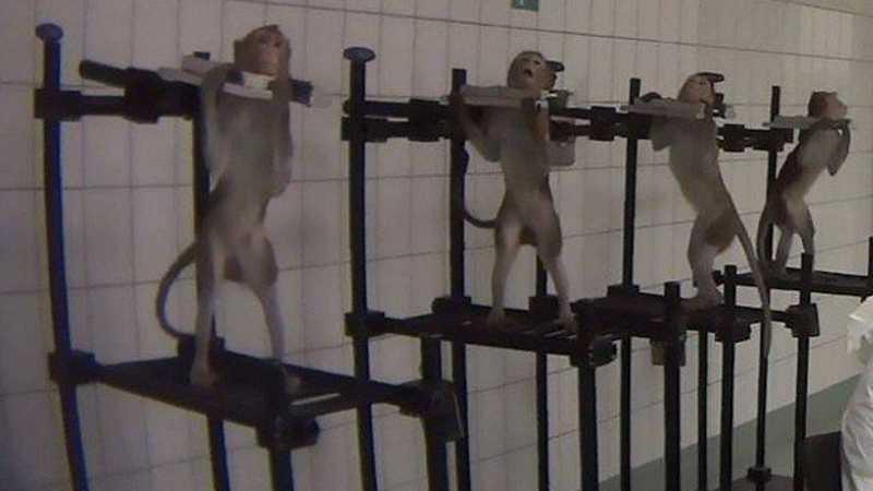 O desespero dos animais enfureceu ativistas (Foto: Divulgação/Soko Tierschutz e Cruelty Free International)