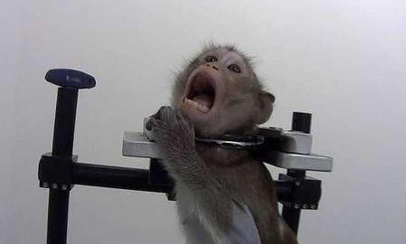 'O pior tratamento se dá com os macacos', diz ativista (Foto: Divulgação/Soko Tierschutz e Cruelty Free International)