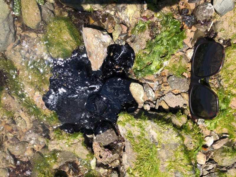 Manchas de óleo são encontradas na praia de Riacho Doce, em Maceió — Foto: Divulgação/Instituto Biota