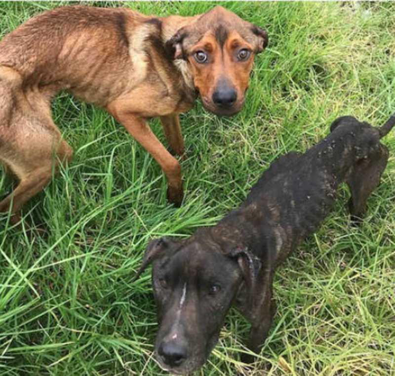 O indivíduo, de 37 anos, deixou os cães em estado deplorável. FOTO: REPRODUÇÃO/DAILY MAIL