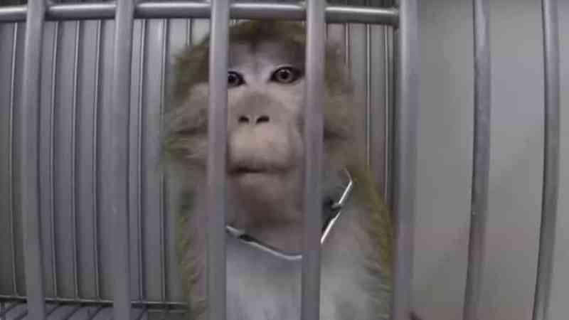 'Laboratório dos Horrores' terá escondido animais durante investigação