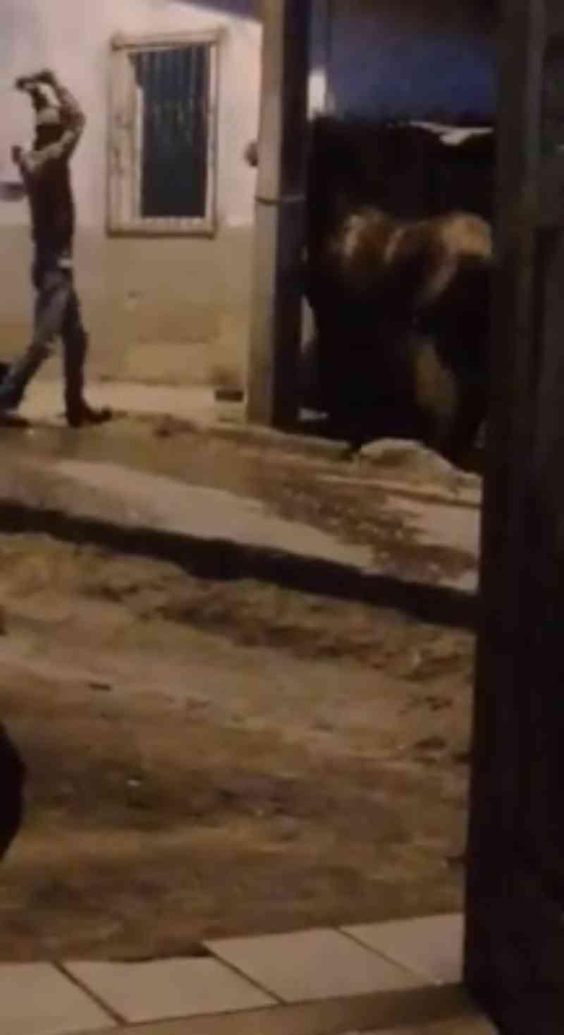 Crueldade: homem espanca animal a pauladas e vídeo causa revolta em Itamaraju, BA