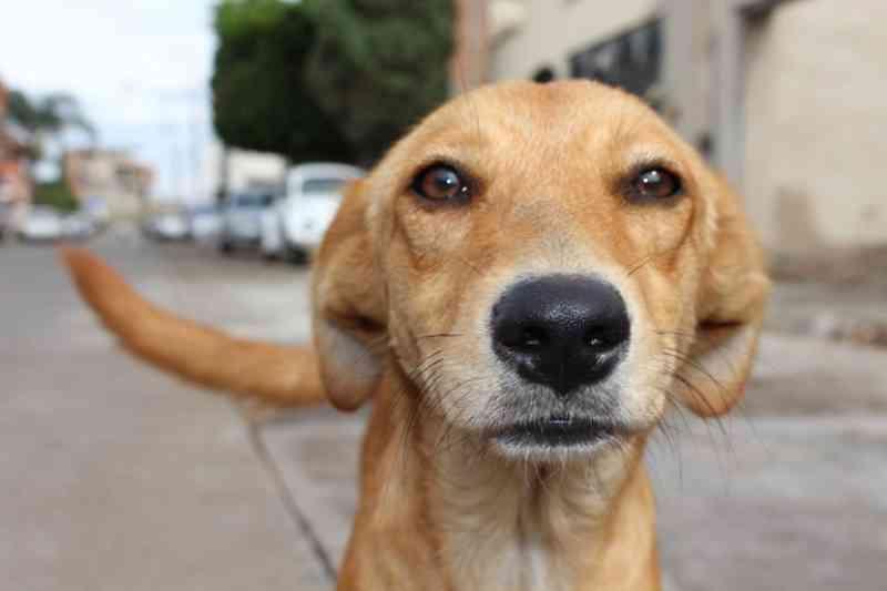 Câmara de Salvador (BA) aprova projeto que aplica pena em quem pratica maus-tratos nos animais