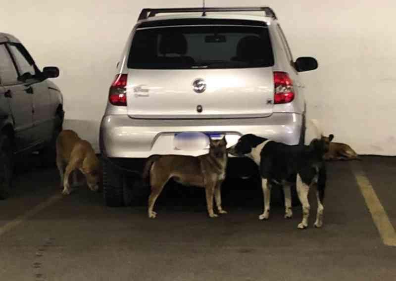 Supermercado é acusado de dopar e matar animais de rua na Bahia; empresa nega