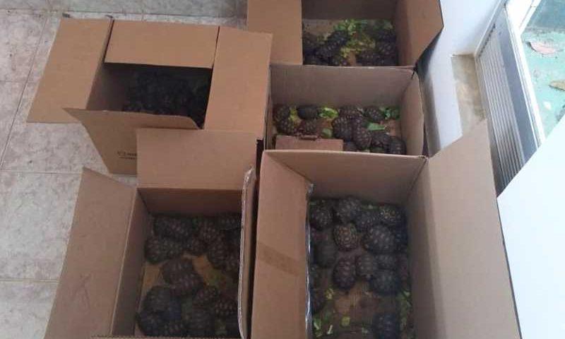 Animais foram resgatados em ação realizada entre 6 e 12 de outubro — Foto: Divulgação/MP-BA