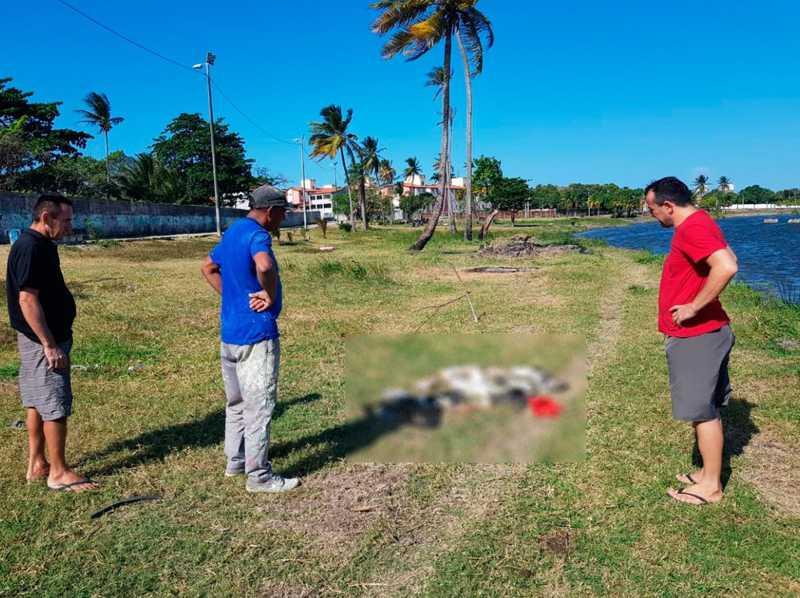 Moradores encontraram os animais mortos na manhã deste sábado (12) — Foto: Ricardo Mota/Sistema Verdes Mares