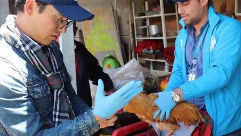 Organização resgata três aves que eram violentadas sexualmente por um idoso
