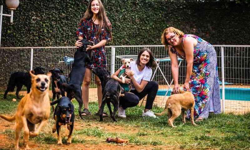Solidariedade: mulheres fundam projeto para resgatar animais