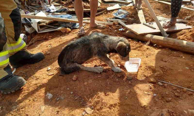 Cadela é resgatada dos escombros de derrubada em Sobradinho, no DF