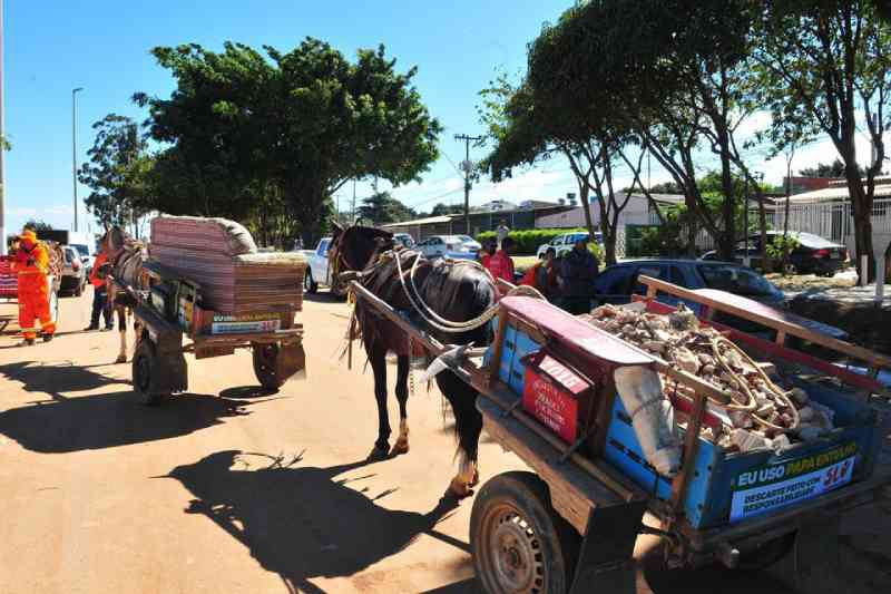 Justiça dá 90 dias para Governo do DF regulamentar lei que proíbe carroças