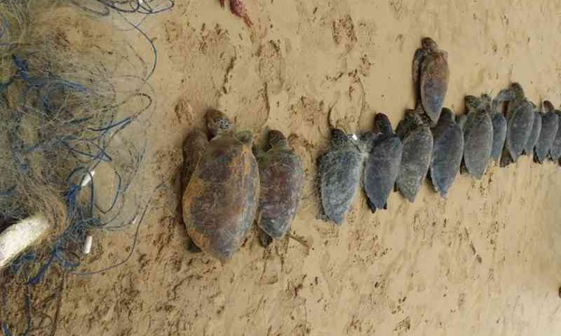 Tartarugas encontradas em praia da Serra (ES) morreram afogadas, diz Iema
