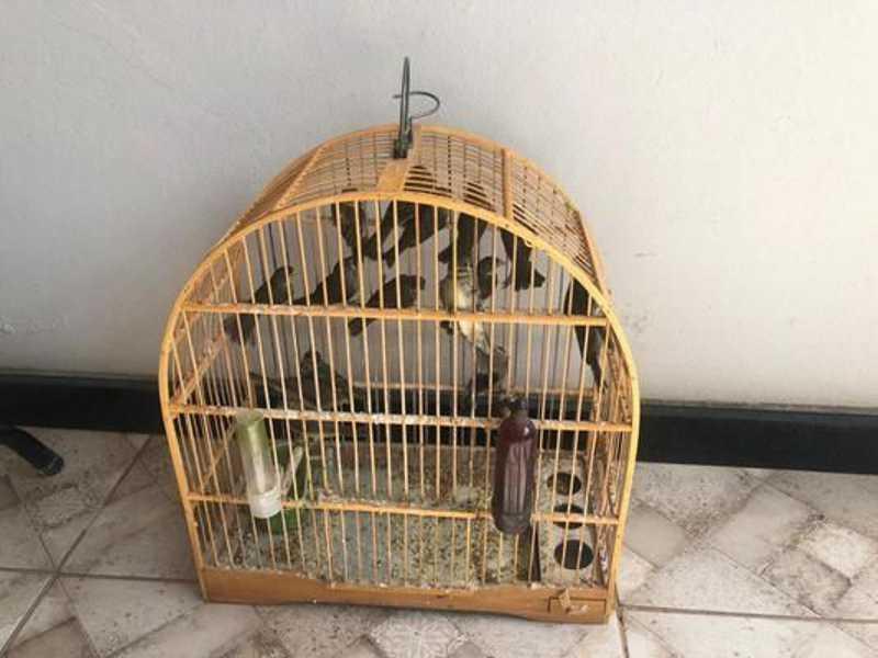 Aves que viviam em gaiola pequena e sem água são resgatadas